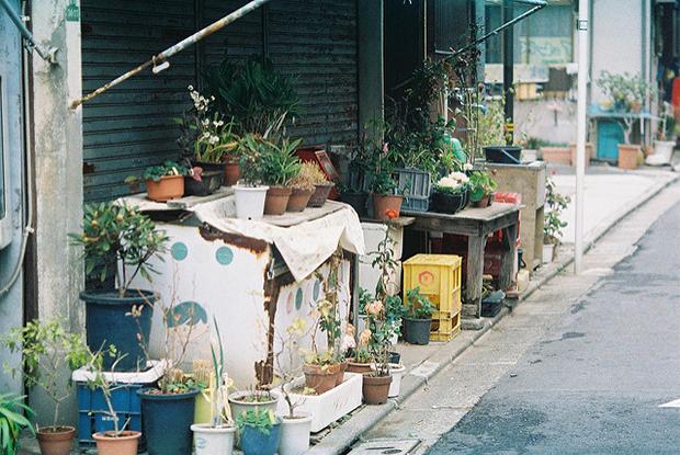 pot plante japonnais seuil porte convivialite