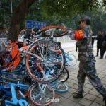 Quand les vélos montent aux arbres