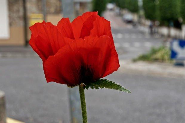 Une fleur dans la ville