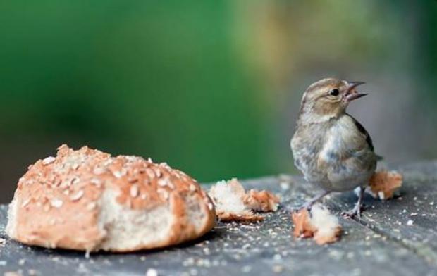 Entre mauvais gestes et dispositifs répulsifs, difficile de trouver une juste place aux oiseaux dans les villes