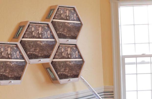 Des ruches à la maison? C'est le projet de la start-up Beecosystem pour contribuer à sensibiliser sur l'importance des abeilles © Beecosystem