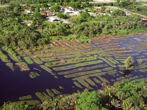 Champs surélevés précolombiens à l'ouest de la Guyane - Stéphen Rostain